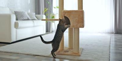 Katze und Kratzbaum