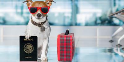 Pasaporte para perros: cuándo y dónde sacarlo, precio y recomendaciones