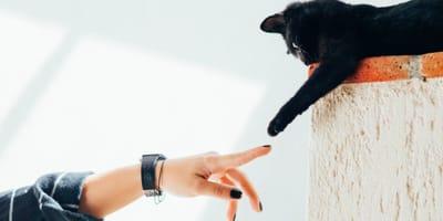 Cat god image