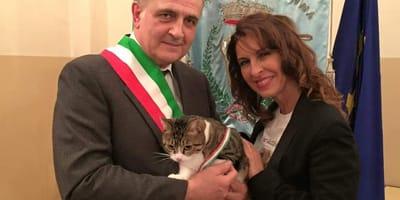 gatto con fascia tricolore