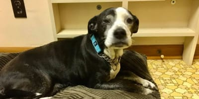 Man wanted to euthanize his dog because it was too old, but then, a hero arrives!