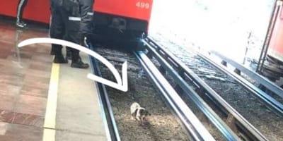 Perrito rescatado en el metro se llama Hangor