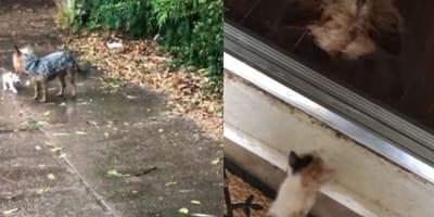 un perro y un gato bajo la lluvia