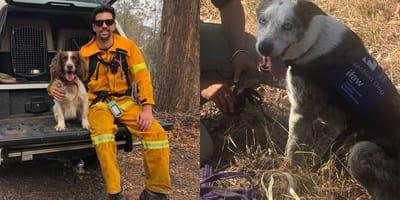 <p>Australia usa perros de rescate para ayudar a koalas y quols en riesgo durante los incendios.&nbsp;</p>  <p>Fuente: Facebook.</p>