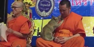 Kätzchen sitzt auf betendem Mönch