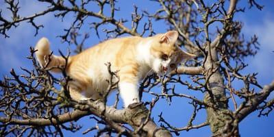 Eine Katze im Baum