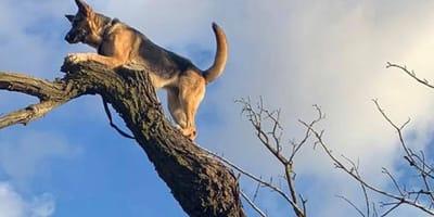 Perro rescatado de árbol