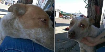 jacob el hachiko mexicano perro espera a su dueño