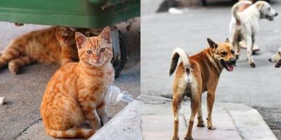 TERRIBLE VERDAD: 70% de los animales regalados terminan en la calle