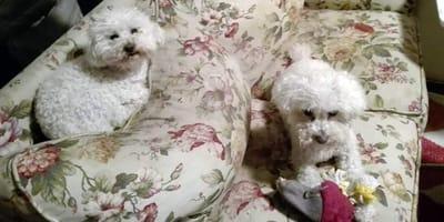 perros doy y tobias