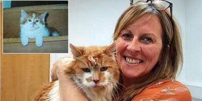 <p>Rubble jest obecnie najstarszym żyjącym kotem.</p>