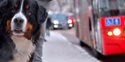 Vagoni del metrò riservati a cani e gatti: la proposta che fa discutere