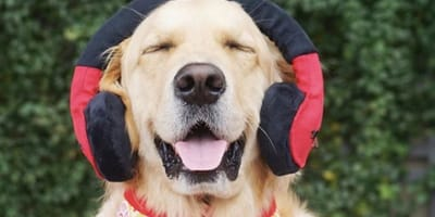 Spotify launches the perfect podcast for your lonely pooch
