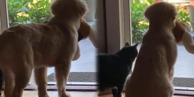 Die beiden Tiere warten gespannt