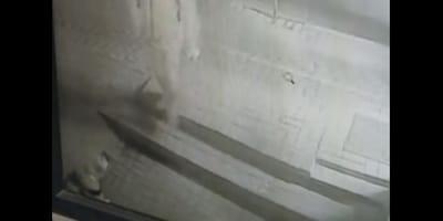 Pies_pod_sklepem_atakowany_gazem