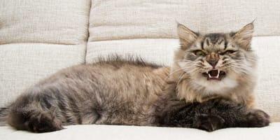 Tipos de ruidos molestos para gatos
