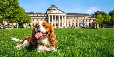 Hund vor Kurhaus in Wiesbaden