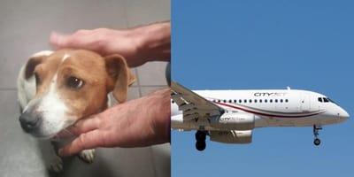 Dog abandoned at airport