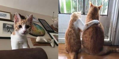 Kitten and ginger cat