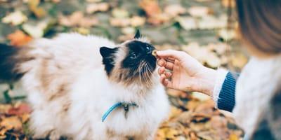 Kot_kobieta_podaje_jedzenie