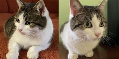 Kot_dachowiec_z_aukcji