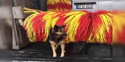 perro se baña en autolavado