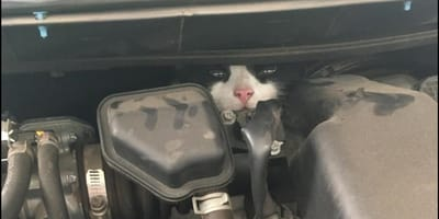 rescatan a gatito en culiacan