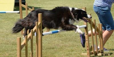 Sporty dla psów - najpopularniejsze psie sporty