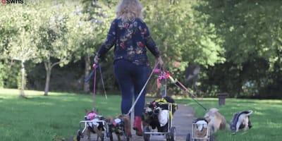 Claire-Louise Nixon e i cani