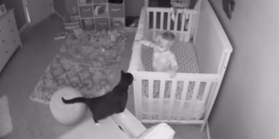 Nanny cam captures cat and toddler having adorable conversation
