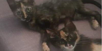 brownie tiramisu gatas adopcion madrid