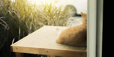 gatto-rosso-di-schiena