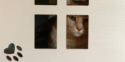 Niezwykłe łapki tego kota sprawiły, że stał się gwiazdą Instagrama!