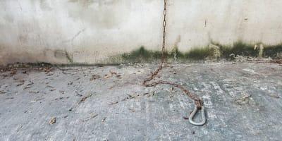 crece el número de perros robados en la ciudad de México