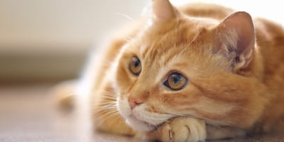 Basic cat hygiene tips you need to follow
