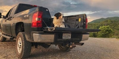 Collie dog lies on bed of pickup truck