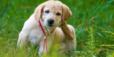 Flöhe beim Hund – Erkennen, bekämpfen, vorbeugen