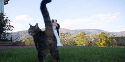 25 fotos graciosas de gatos entrometidos tomadas en el momento perfecto