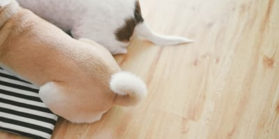How does a dog use its tail to communicate with other dogs and humans?