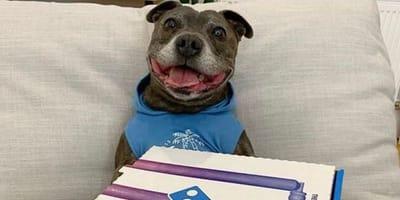 perro pizza sonrisa