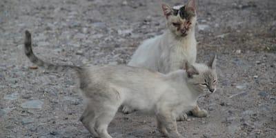 Kranke Straßenkatzen