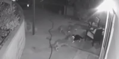 Owners see shadows outside and rush out to save their cat's life