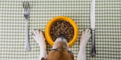 restaurantes petfriendly con menu para perros