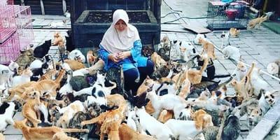 refugio para gatos en indonesia