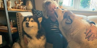 The clip shows how much the dogs love their grandma