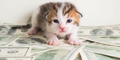 Kätzchen auf Geldscheinen