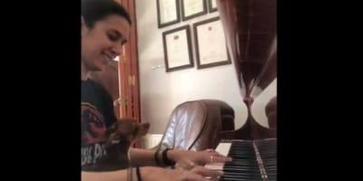 un-chihuahua-canta-con-la-padrona-al-pianoforte