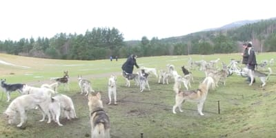 The UK's biggest sled dog rally takes place in Highlands this weekend