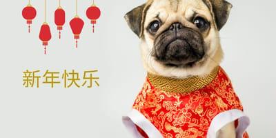 Conoce las razas de perros de China, sus características y fotos