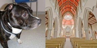 cane-e-interno-di-una-chiesa